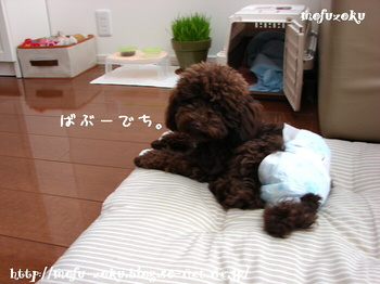 2011_04_17_01.jpg